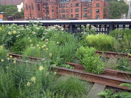 Train Tracks and Plants.
